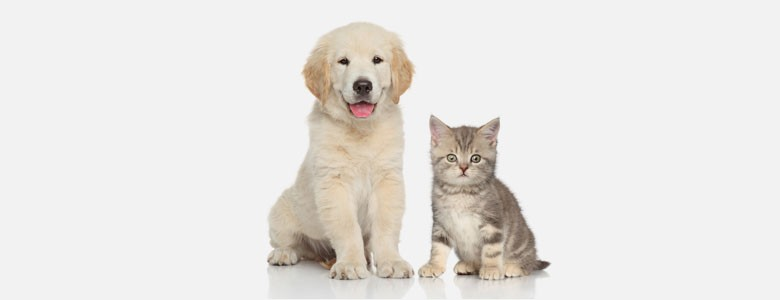 When puppy love fades - Lexis Nexis Interview on the rise of the Pet Nup - Divorce Solicitor